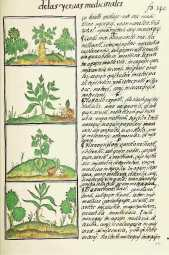 lienzo-tela-codice-florentino-plantas-medicinales-azteca-D_NQ_NP_174121-MLM20704048119_052016-F